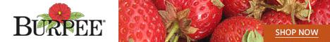 Burpee Fruit Seeds & Plants