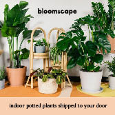 Bloomscape, Easy Indoor Potted Plants Shipped to Your Door