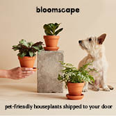 Bloomscape, Pet-Friendly Houseplants Shipped to Your Door