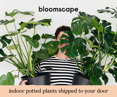 Bloomscape, Large Indoor Potted Plants and Trees Shipped to Your Door